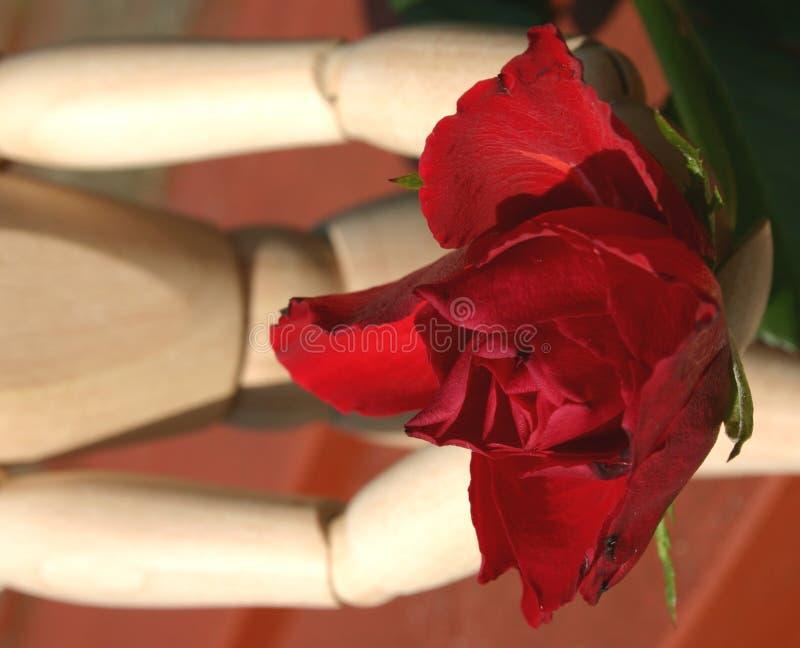爱提供玫瑰色 图库摄影