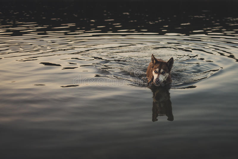 爱斯基摩在湖 免版税库存照片