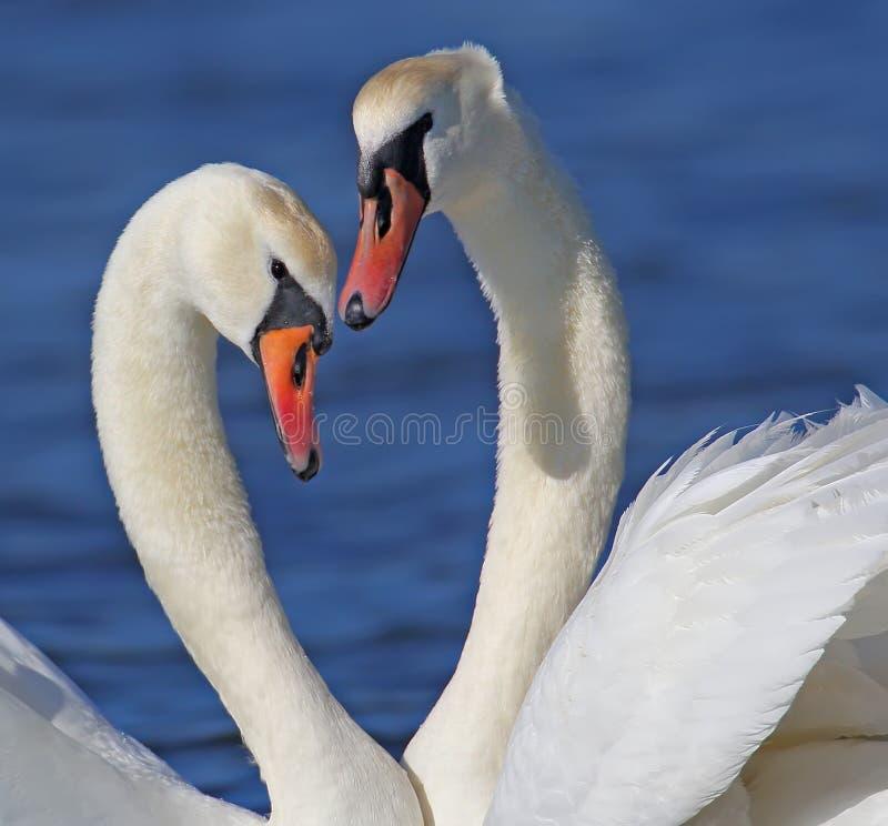 爱是…在白色背景的桃红色标志 库存照片