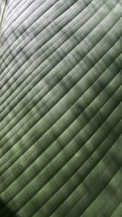 爱树木的人叶子是发光的条纹 免版税库存照片