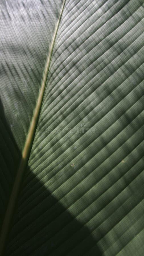 爱树木的人叶子是发光的条纹 图库摄影