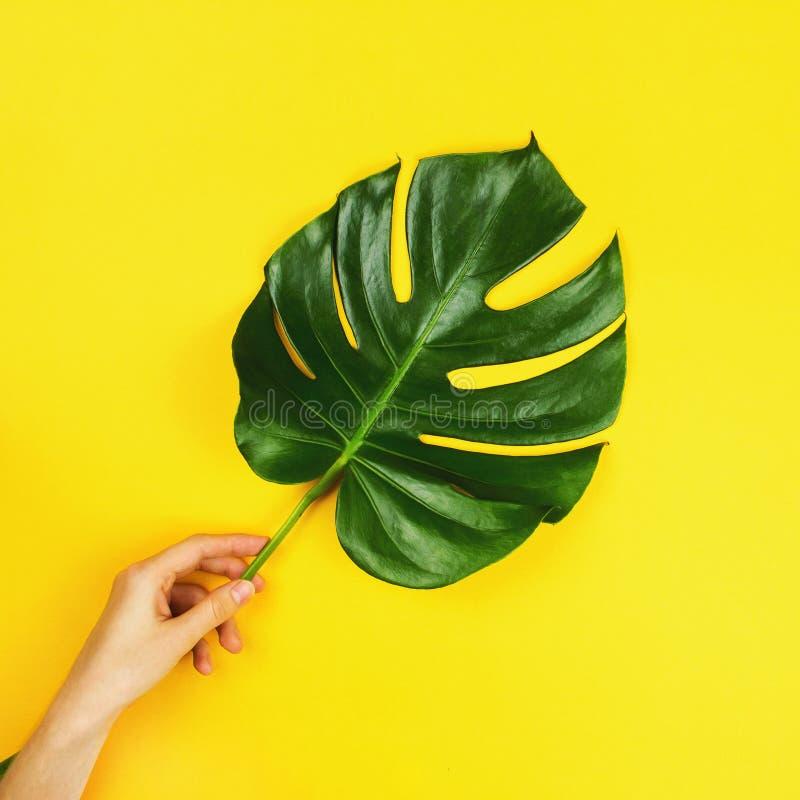 爱树木的人monstera一片热带叶子在女孩` s手上 免版税库存照片