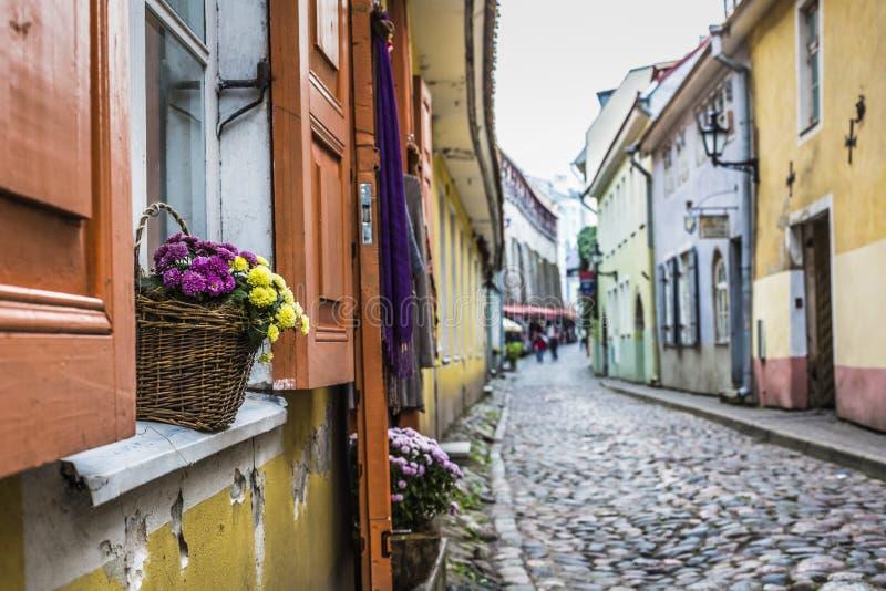 爱沙尼亚老街道塔林 免版税库存照片