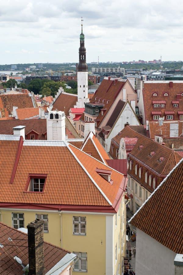 爱沙尼亚,塔林 免版税库存照片