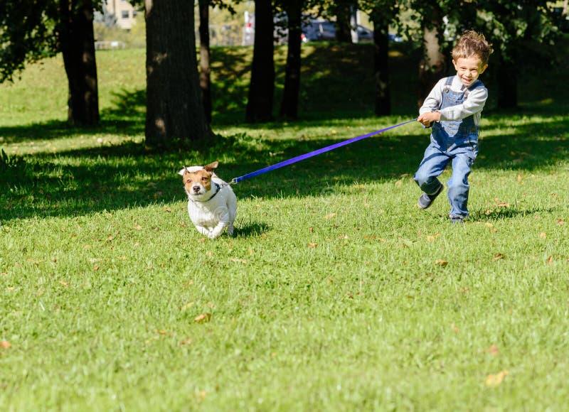 爱犬扯拽紧张的皮带的小孩男孩 库存照片