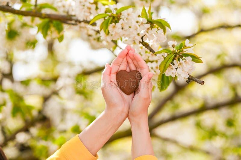 爱的概念对自然的 夏天绽放 r 免版税库存照片