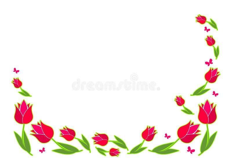 爱背景,春天花,在白色的绯红色郁金香 与花的一个白色背景 库存例证