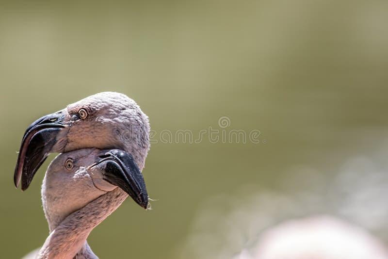 爱鸟和结构树 物质享受的滑稽的动物图象 火鸟hu 图库摄影