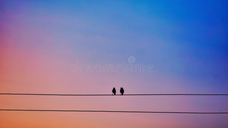 爱鸟和结构树 库存图片