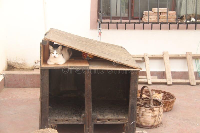 爱琴海区域-博兹贾岛海岛,猫房子 库存图片