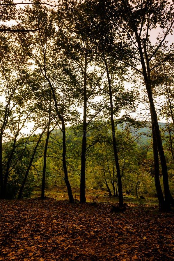爱琴海地区秋天森林  免版税库存图片