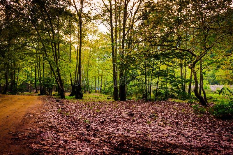 爱琴海地区秋天森林  免版税库存照片