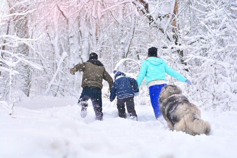 父亲、母亲、儿子和他们的大狗奔跑在冬天多雪的森林里 免版税库存图片