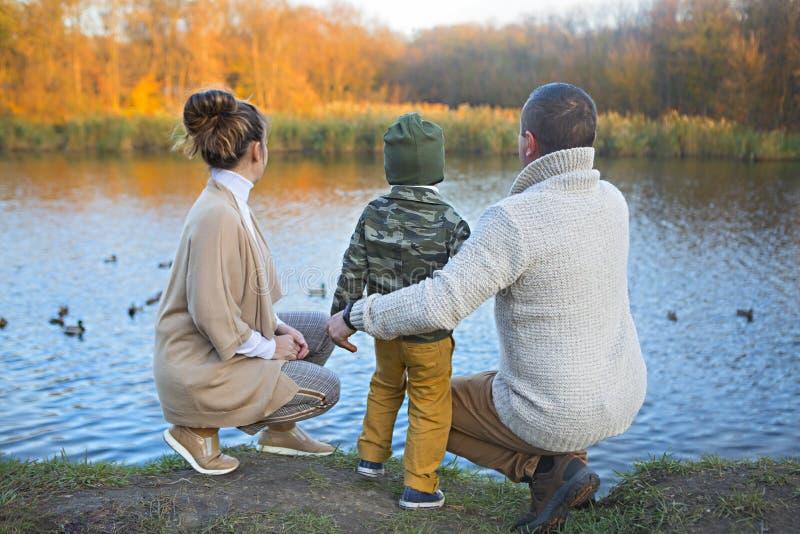 父亲、母亲和小儿子哺养的鸭子 免版税库存图片