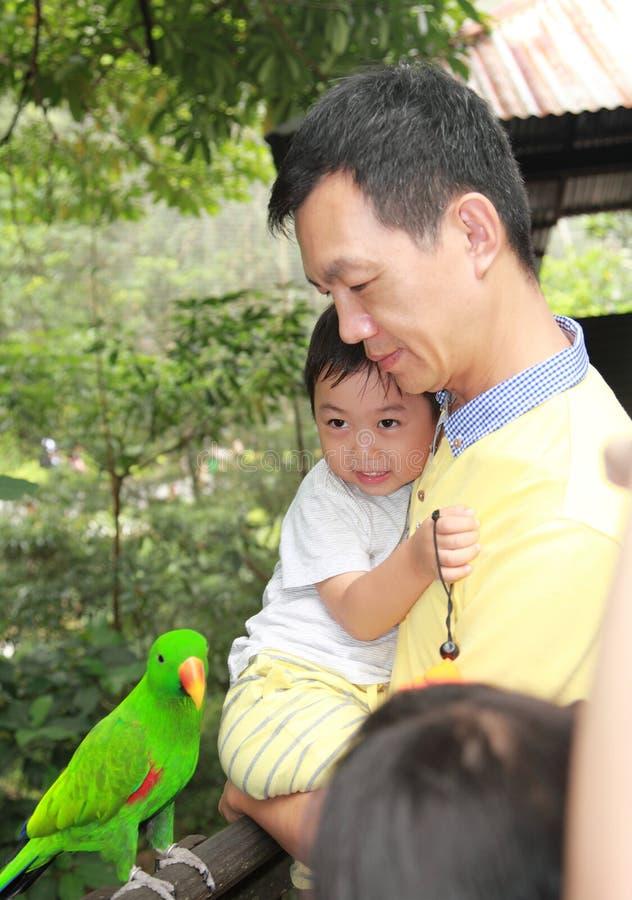 父亲和儿子句容飞禽公园在新加坡 免版税库存图片