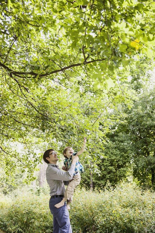父亲和儿子探索的自然 库存图片