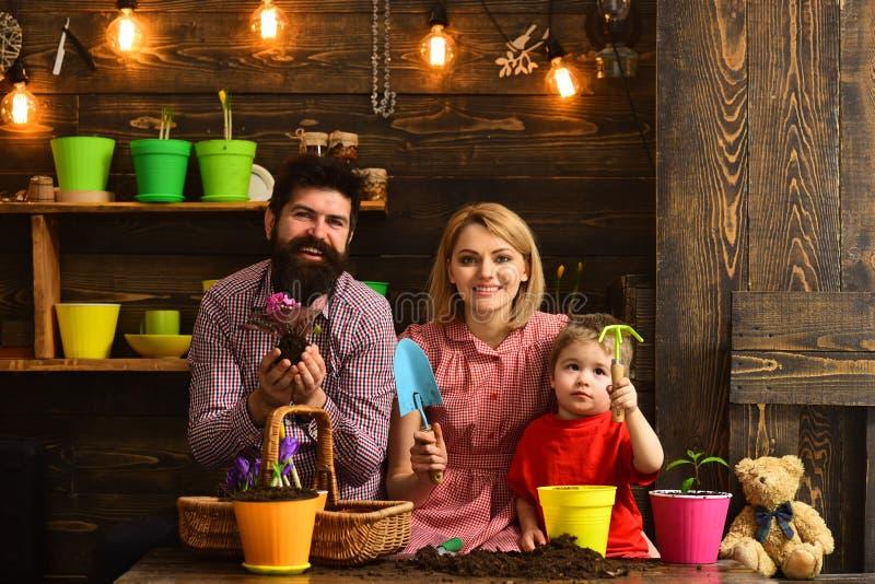 父亲和儿子有母亲的 家庭天 温室 有春天花的愉快的花匠 花关心浇灌 土壤 图库摄影