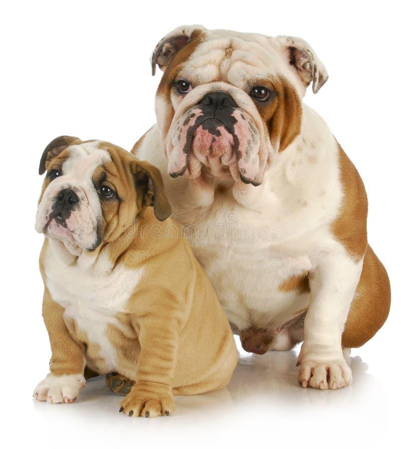 父亲和儿子狗 免版税图库摄影