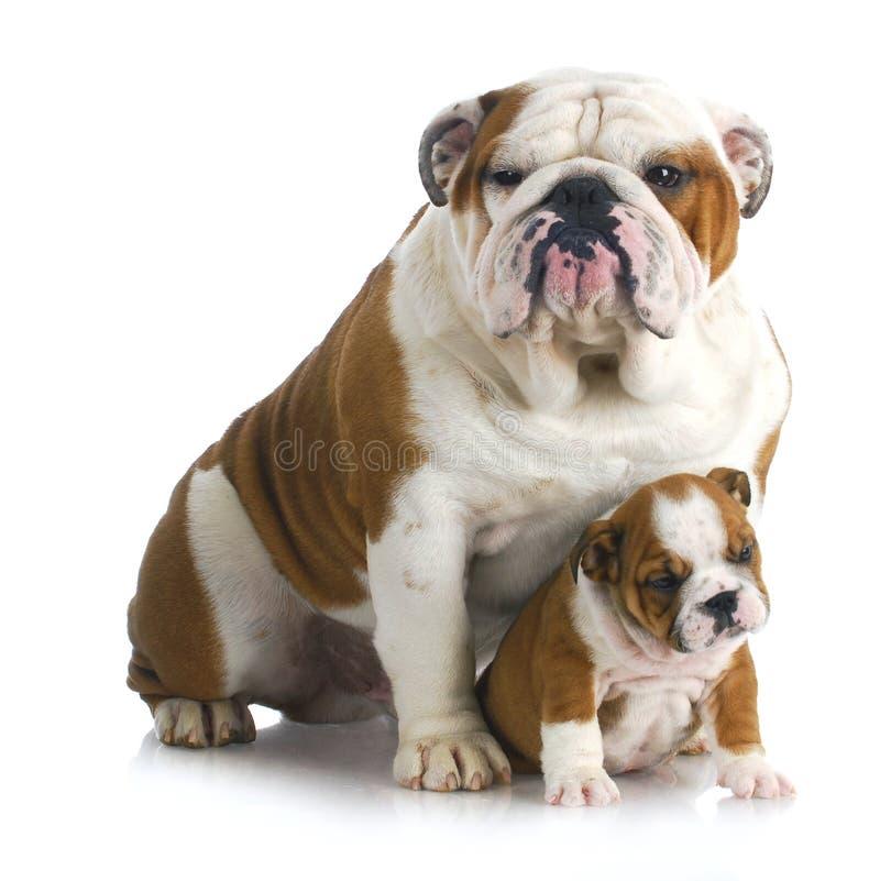 父亲和儿子狗 图库摄影