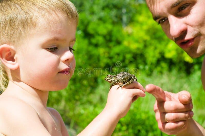 父亲和儿子考虑青蛙 图库摄影