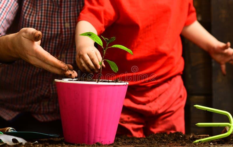 父亲和儿子 父亲节 花关心浇灌 土壤肥料 有春天花的愉快的花匠 有胡子的人 免版税库存图片
