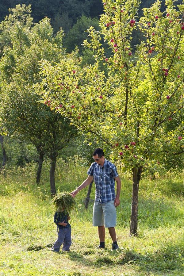 父亲和子项在苹果园 免版税库存图片