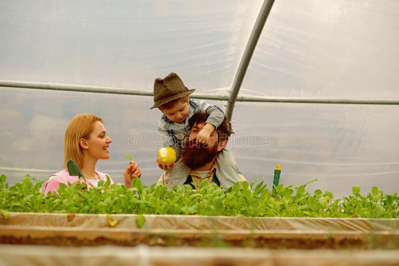 父亲母亲和儿子自温室 有母亲和父亲工作的儿子自温室 母亲父亲和儿子自温室 图库摄影