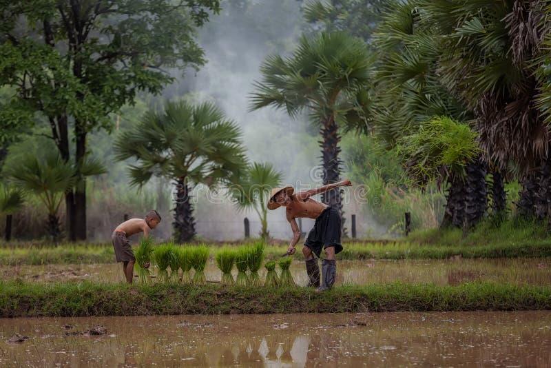 爸爸和儿子这是家庭农夫生活方式在农村亚洲 图库摄影