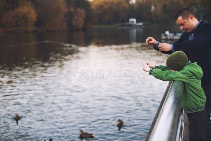 爸爸和儿子饲料鸭子 图库摄影