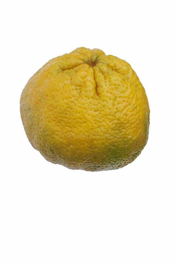牙买加丑橘 库存照片