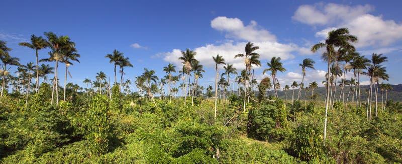 牙买加密林 免版税库存图片