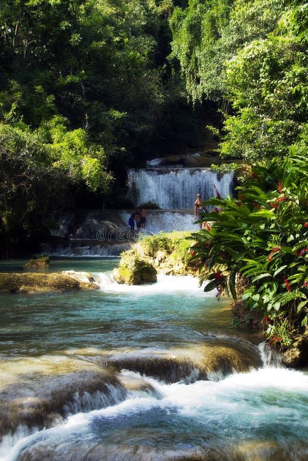 牙买加瀑布 库存照片