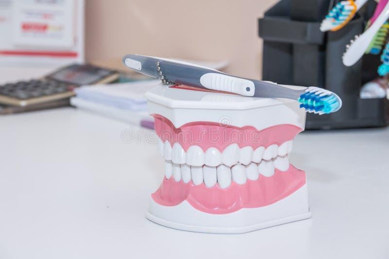 牙刷,干净的牙假牙,牙、牙模型和牙科仪器的牙齿裁减在牙医` s办公室 库存照片