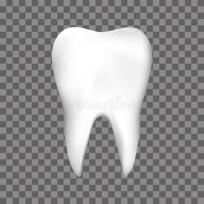牙医或口腔医学牙齿保护设计模板的现实牙 皇族释放例证