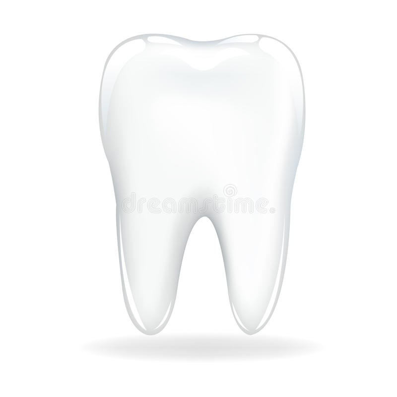 牙向量 库存例证