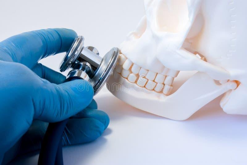 牙疾病的诊断和侦查在牙科,面孔,上部和下颌,口头和上颌面的s的骨头疾病方面  库存图片