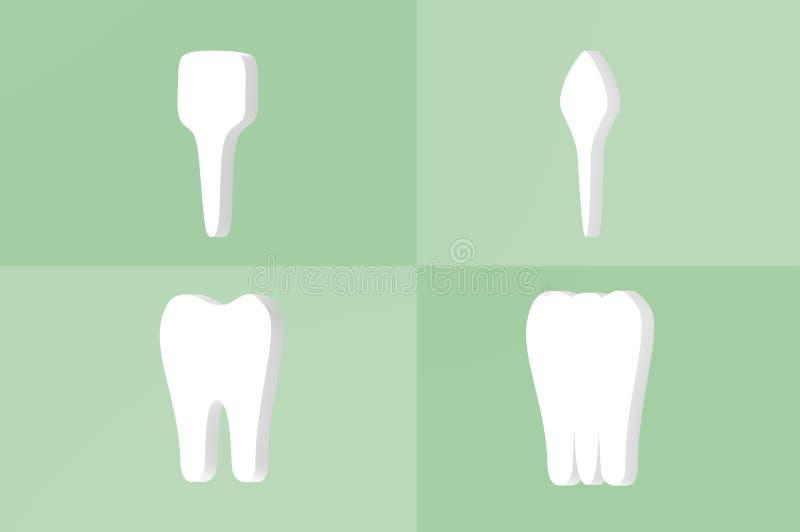 牙类型-门牙、犬、前臼齿和槽牙 库存例证