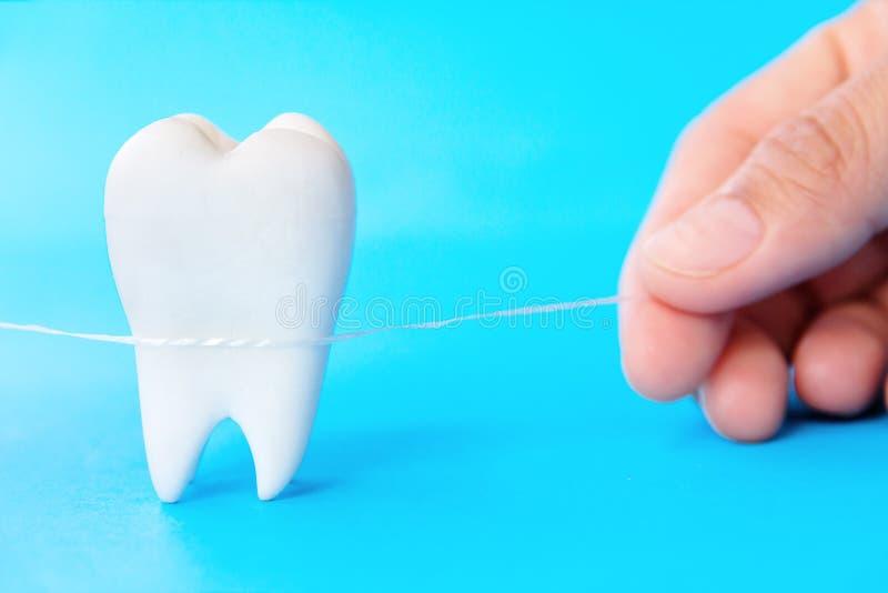 牙齿卫生学概念 免版税库存照片