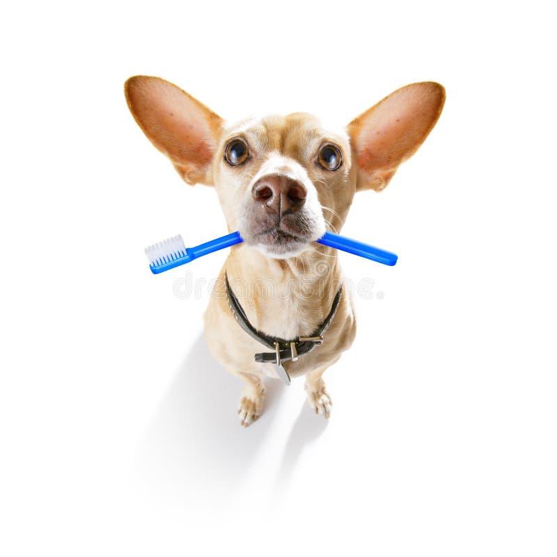 牙齿牙刷狗 免版税图库摄影