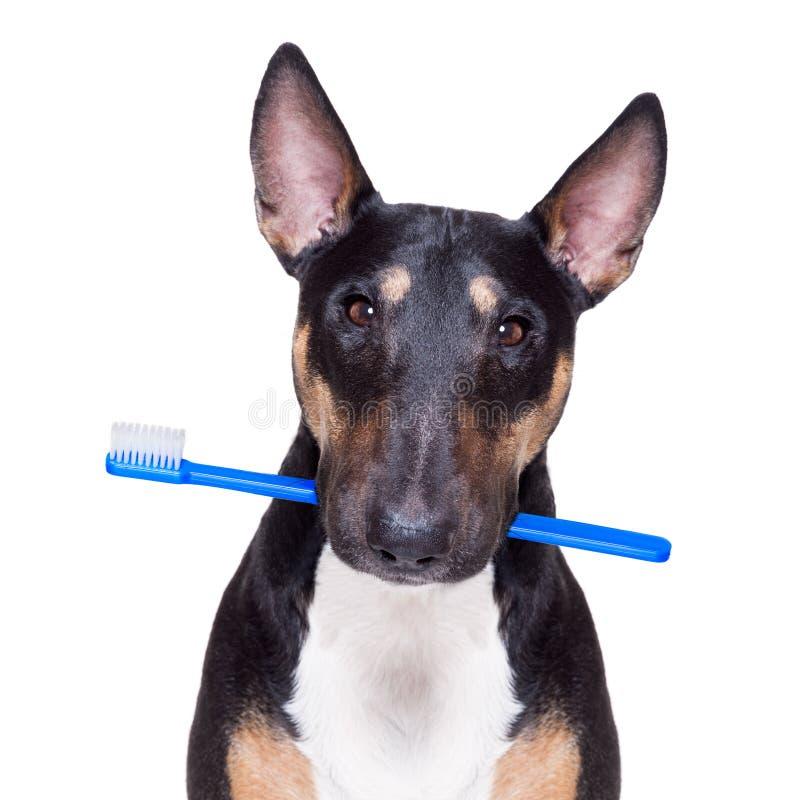牙齿牙刷狗 库存图片