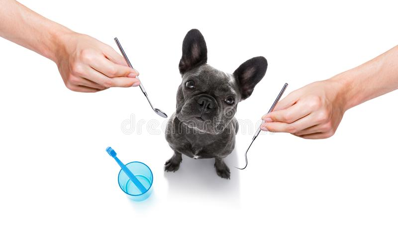 牙齿牙刷狗 库存照片