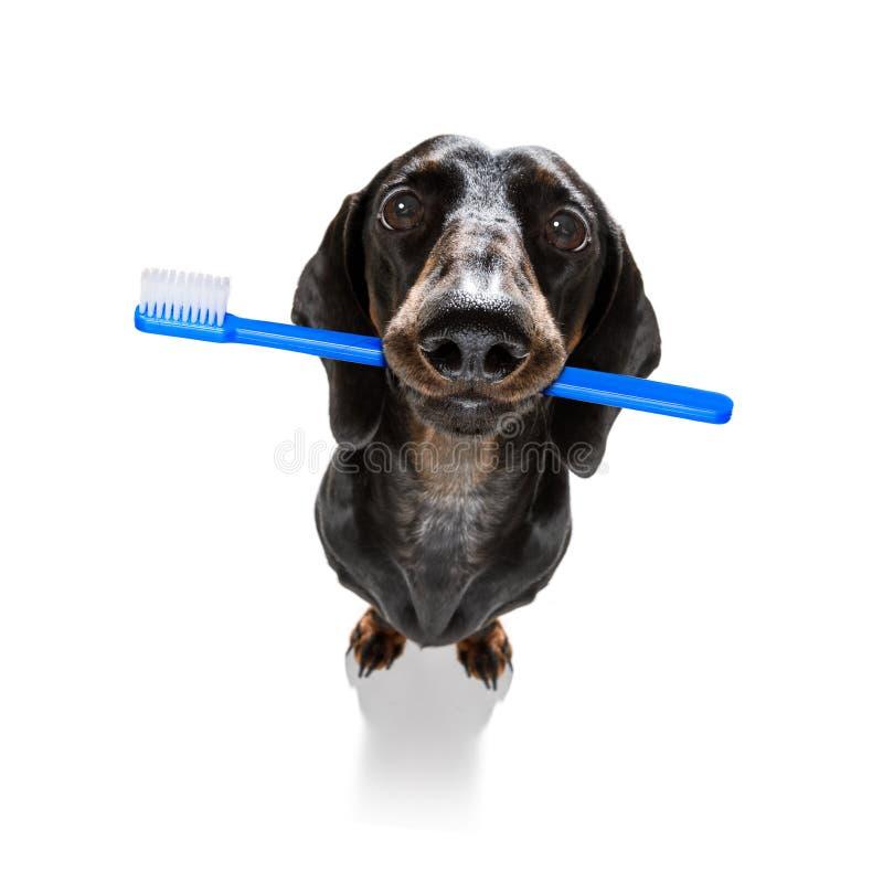 牙齿牙刷狗 免版税库存照片