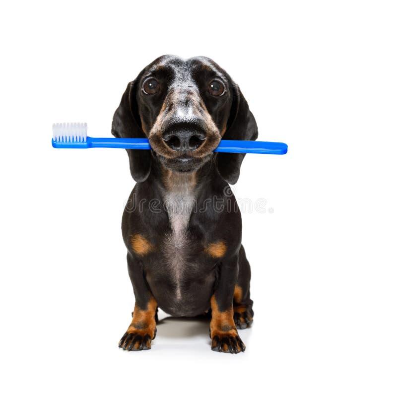 牙齿牙刷狗 免版税库存图片