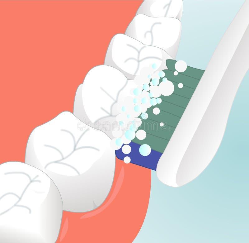 牙齿的关心 库存例证