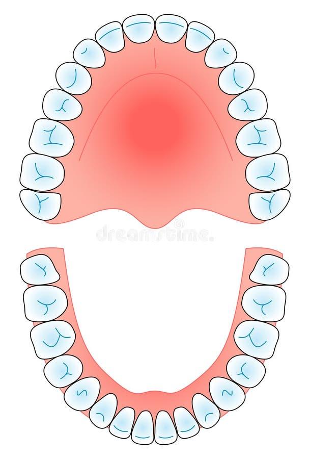 牙齿的曲拱 库存例证