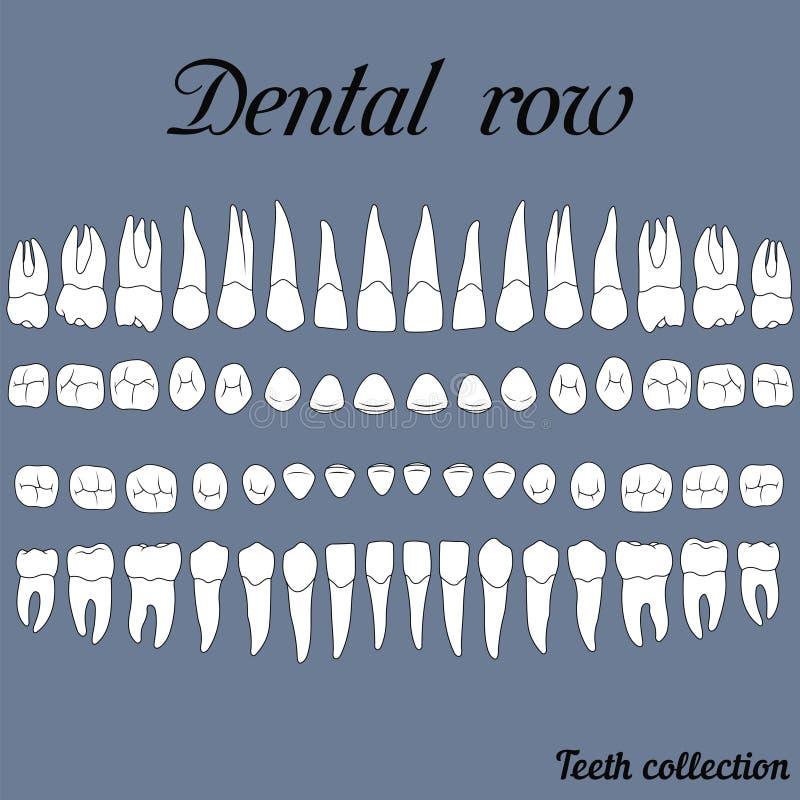 牙齿行牙 库存例证