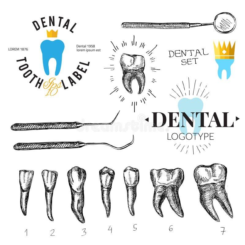 牙齿被设置的标签和象 向量 向量例证