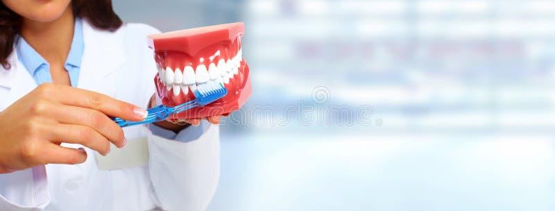 牙医妇女 库存照片