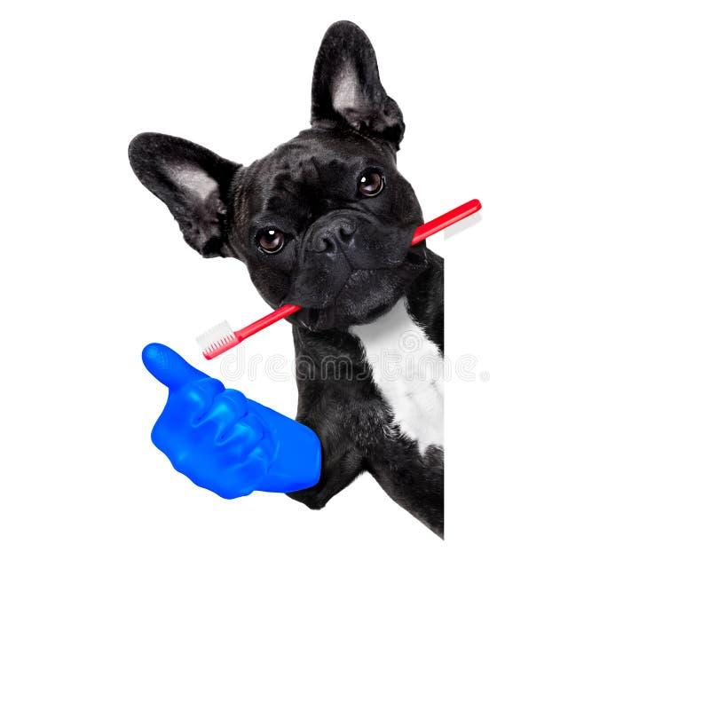 牙医牙刷狗 免版税库存照片
