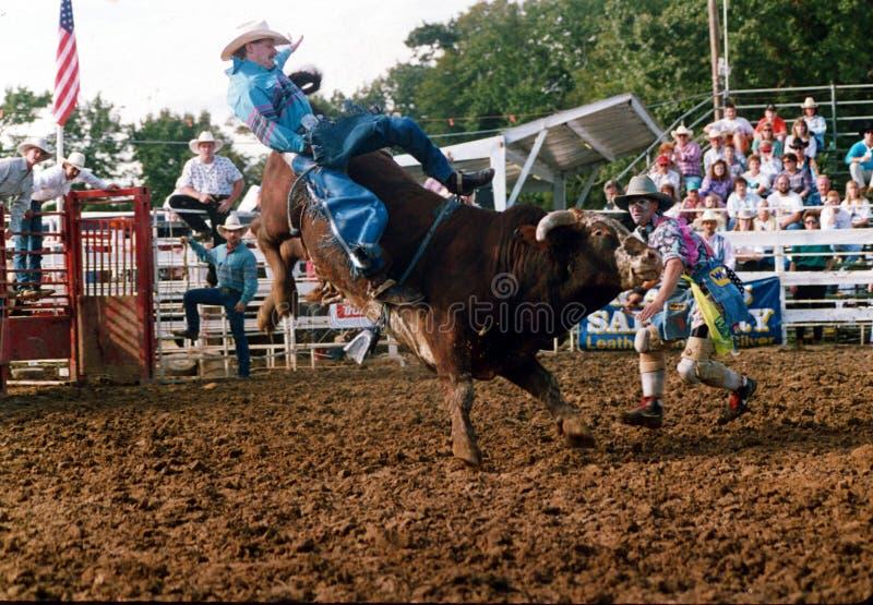 牛仔从一头顽抗的公牛被投掷 免版税库存照片